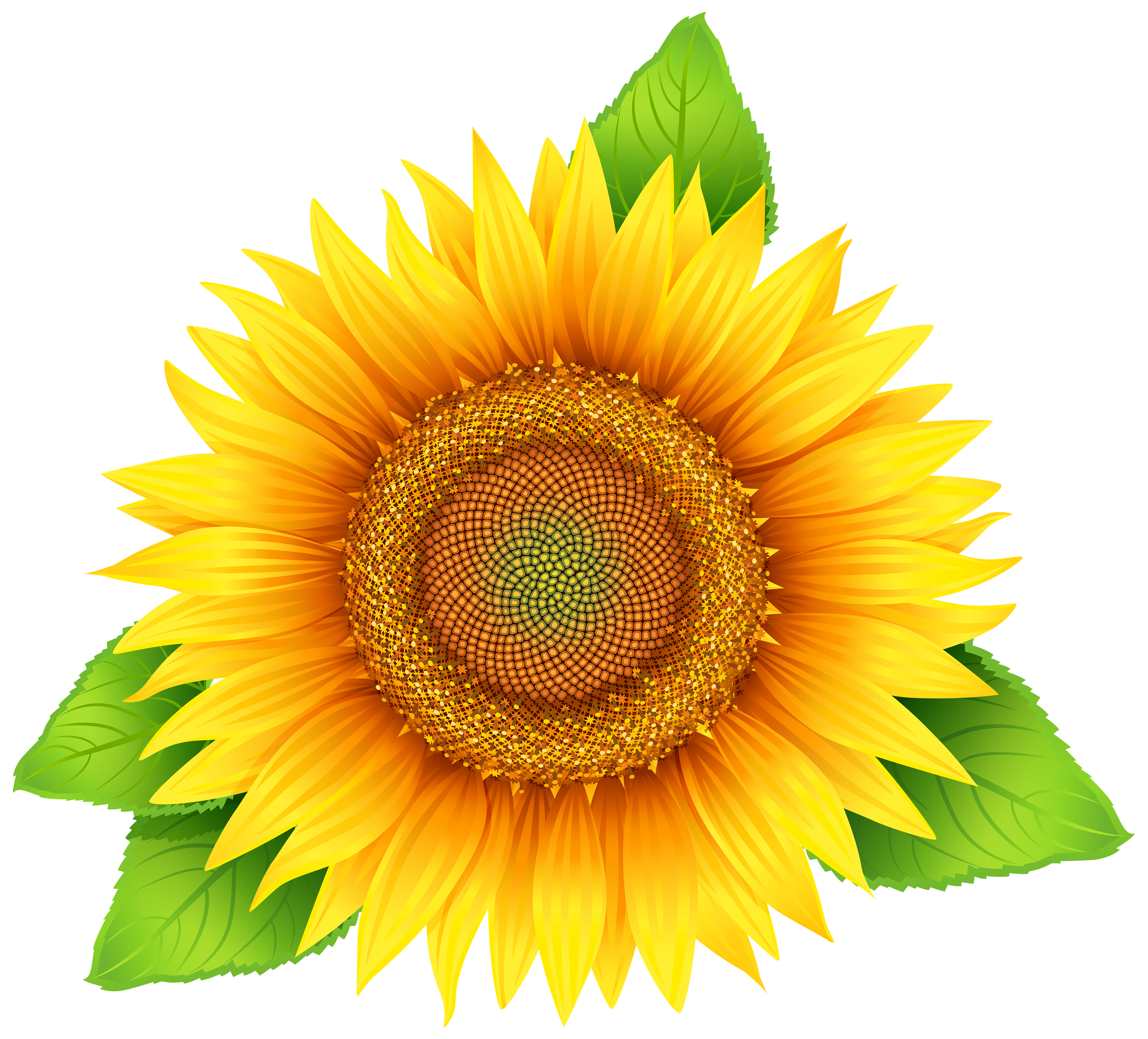 Sun flower clipart jpg download Sunflower PNG Clipart Image | Gallery Yopriceville - High-Quality ... jpg download