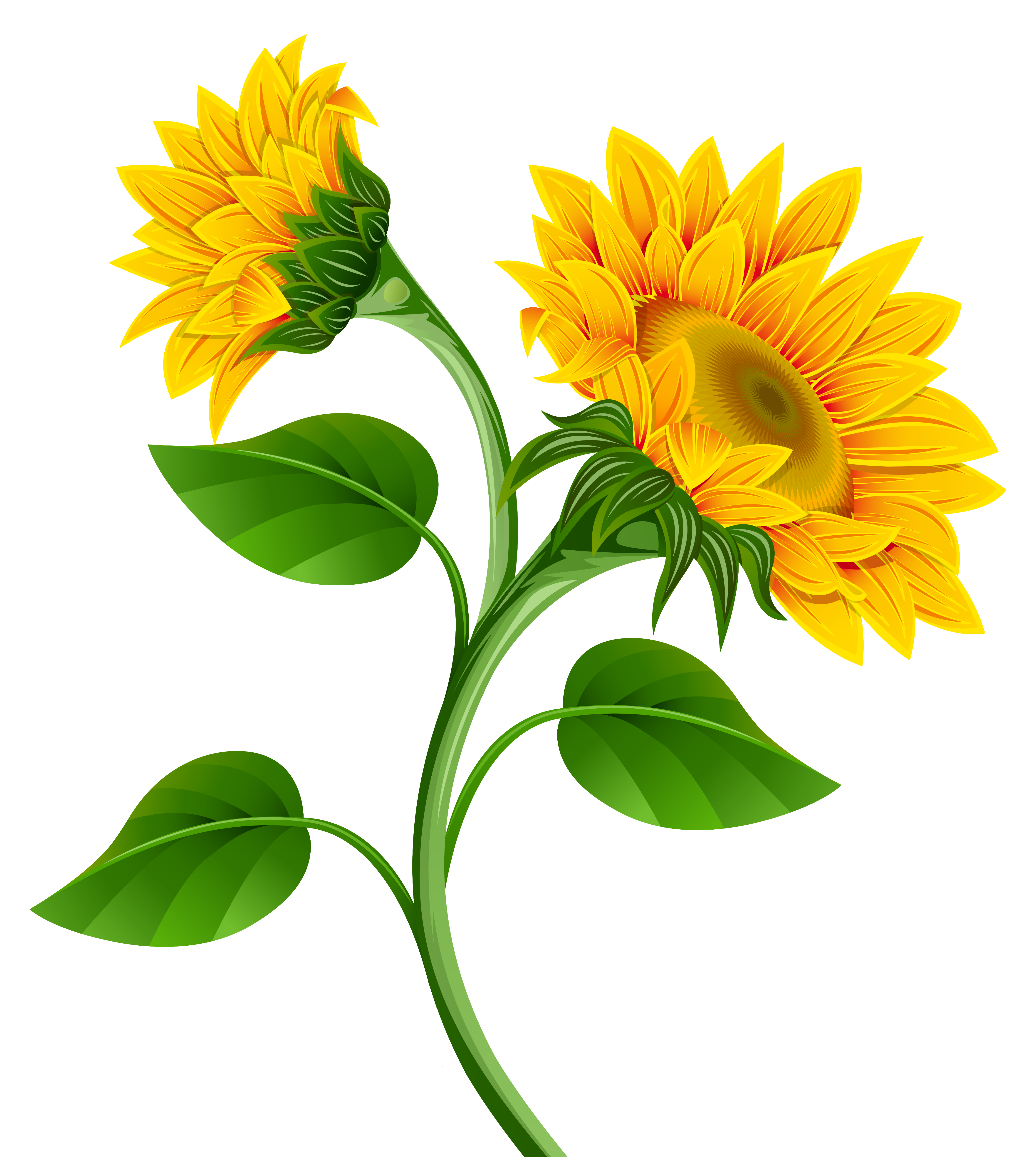 Sun flower clipart svg freeuse library Sunflowers PNG Clipart Image | Gallery Yopriceville - High-Quality ... svg freeuse library