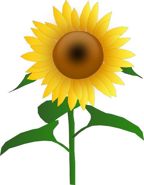 Plant clipart with sun vector library download Free Image on Pixabay - Sunflower, Blooms, Blossom, Golden ... vector library download