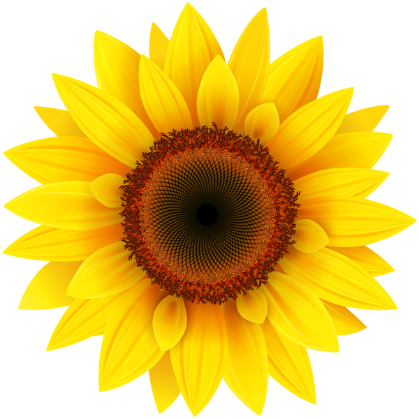 Clipart sun on flowers vector black and white download Sunflower PNG Clipart Picture | Clipart | Pinterest | Sunflowers ... vector black and white download