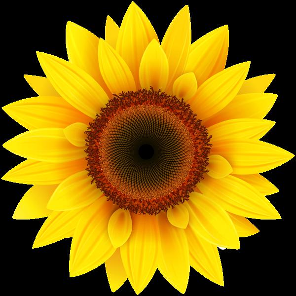 Sunflower sun clipart image library Sunflower PNG Clipart Picture | Clipart | Pinterest | Sunflowers ... image library