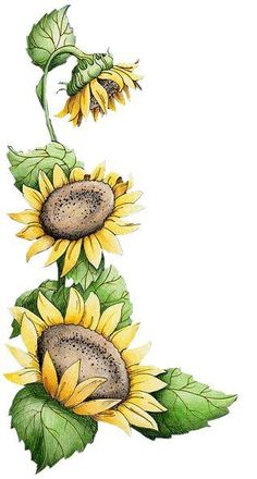 Clipart sunflower yoga tree blonde hair clipart stock 85 Best Sunflower drawing images in 2019 | Paintings of flowers ... clipart stock