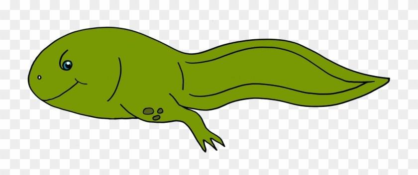 Clipart tadpole free Tadpole with legs clipart 4 » Clipart Portal free