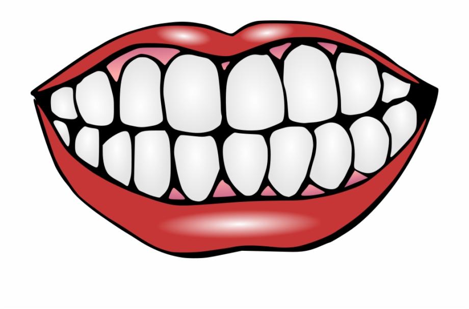 Clipart teeth free png transparent Smiling Jpg - Clip Art Of Teeth Free PNG Images & Clipart Download ... png transparent
