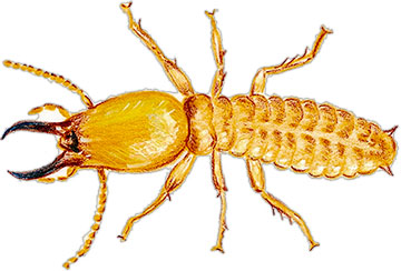 Clipart termites svg library library Termite Clipart | Clipart Panda - Free Clipart Images svg library library