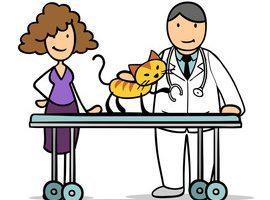 Tierarzt clipart clip library library Tierarzt clipart 5 » Clipart Portal clip library library
