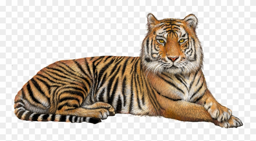 Transparent background tiger clipart image royalty free stock Tiger Clipart Transparent Background Graphic Black - Tiger Hd Images ... image royalty free stock