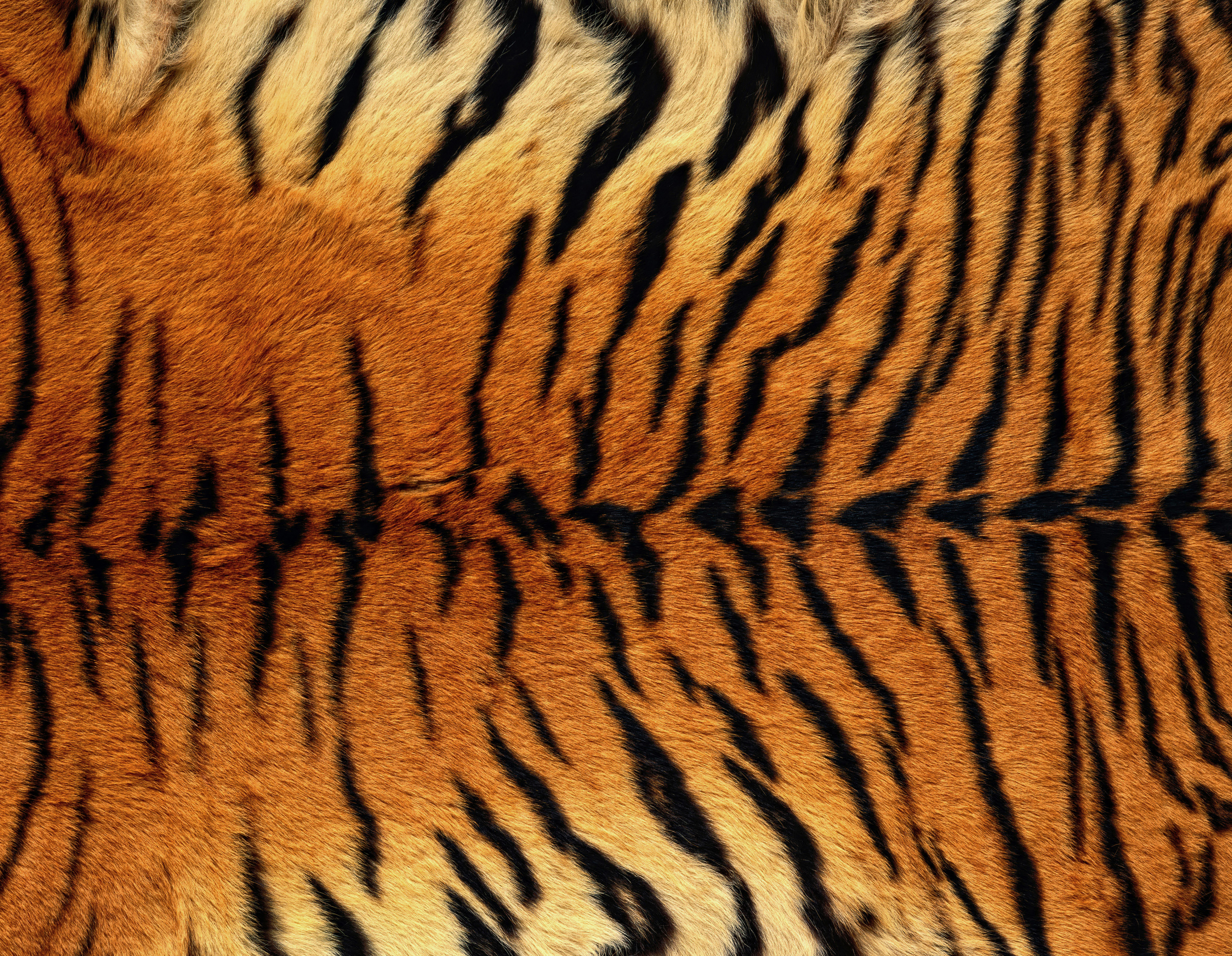 Clipart tiger background free download Tiger Skin Background | Gallery Yopriceville - High-Quality Images ... free download