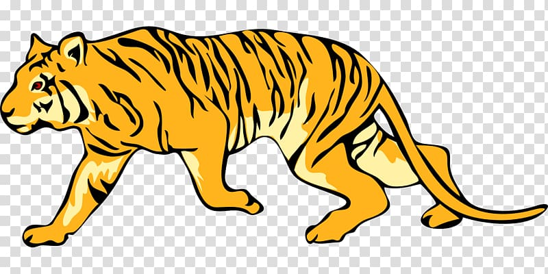 Transparent background tiger clipart banner stock Felidae Bengal tiger White tiger , tigers transparent background PNG ... banner stock