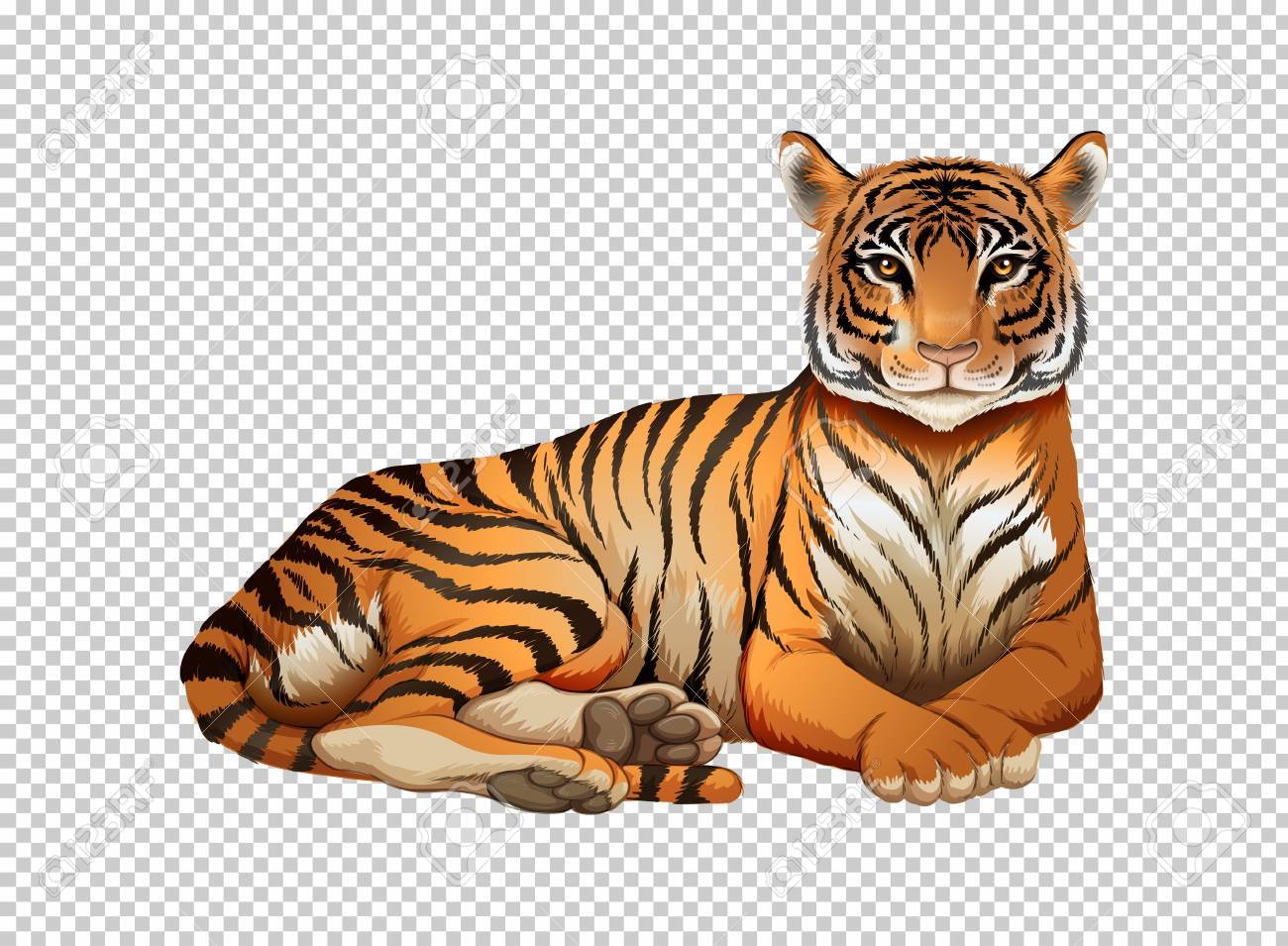 Clipart tiger background picture library Wild tiger on transparent background » Clipart Portal picture library
