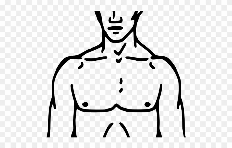 Clipart torso picture transparent library Body Clipart Torso - Neuro Exam Sample Drawing - Png Download ... picture transparent library