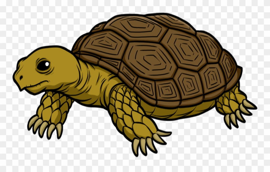 Clipart tortiose banner transparent library Tortoise - Tortoise Clipart - Png Download (#333940) - PinClipart banner transparent library