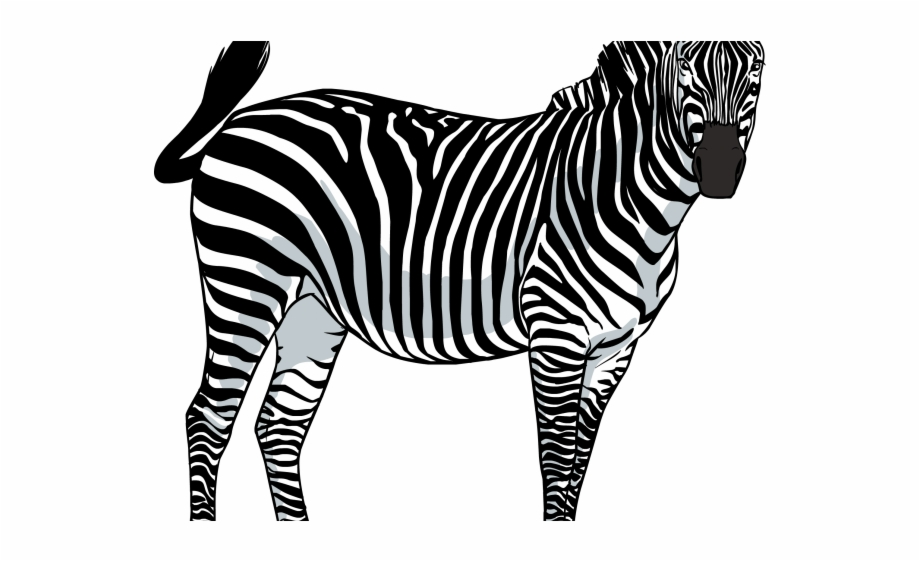 Clipart transparency png freeuse library Zebra Png Transparent Images - Zebras Png Transparency Free PNG ... png freeuse library