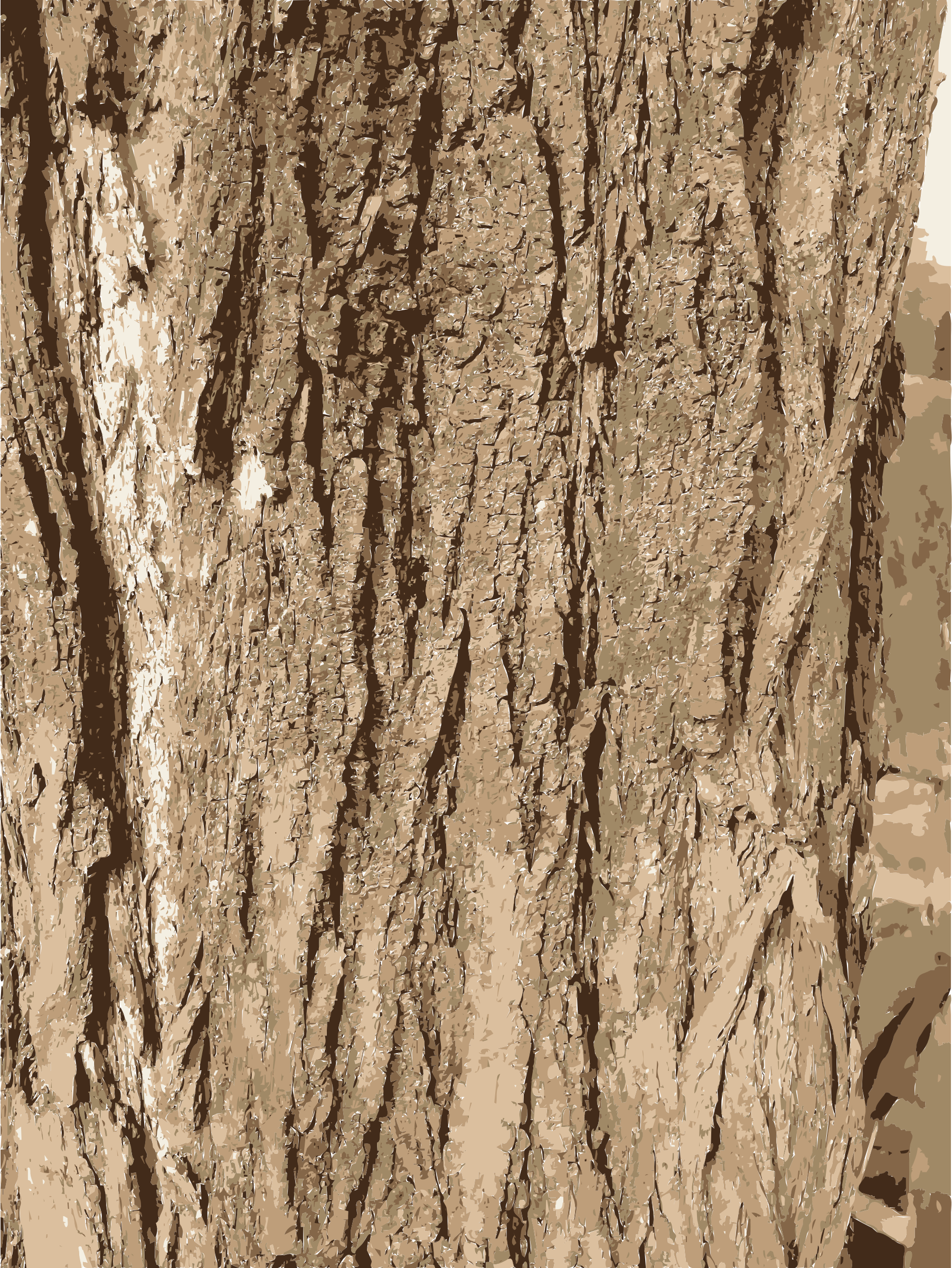 Tree bark background clipart banner transparent download Clipart - Tree bark texture banner transparent download