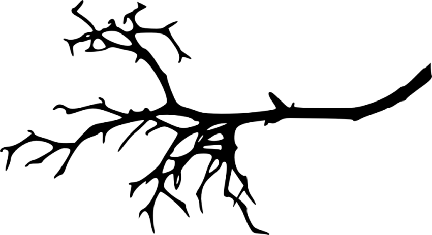 Clipart tree branch silhouette graphic library stock tree branch silhouette png - Free PNG Images | TOPpng graphic library stock