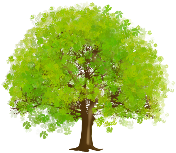 Elm tree clipart svg freeuse Large Green Tree PNG Clipart | Tree Art | Pinterest | Clip art, Tree ... svg freeuse