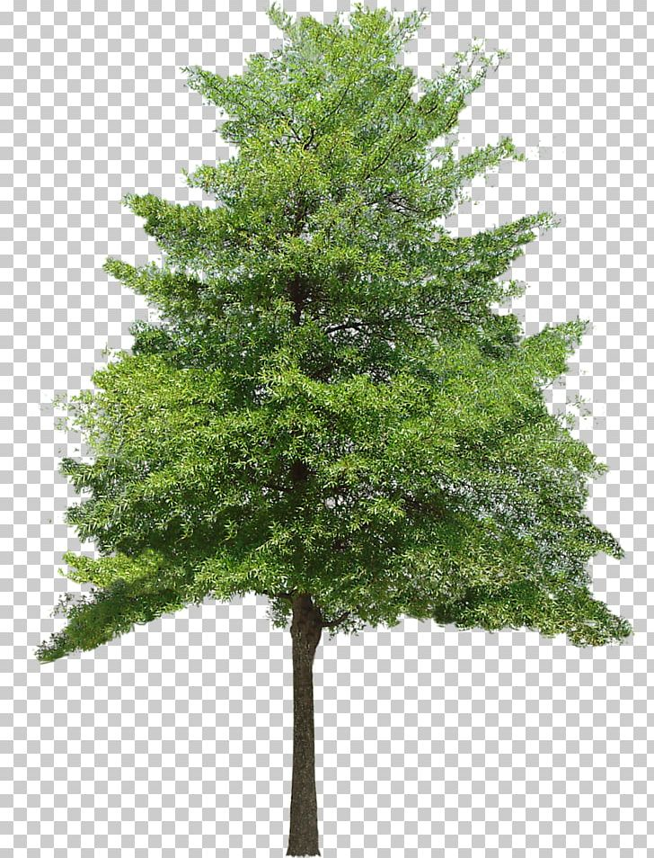 Clipart tree texture free download jpg library library Tree Texture Mapping 3D Computer Graphics PNG, Clipart, 2d Computer ... jpg library library