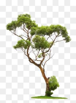 Clipart tree texture free download svg transparent stock Trees, Branches PNG Transparent Clipart Image and PSD File for Free ... svg transparent stock