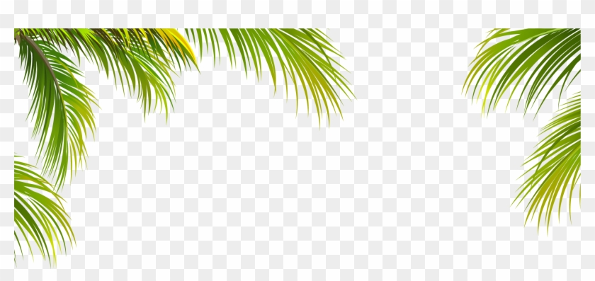 Clipart tree texture free download banner library stock Coconut Leaf Tree Texture Arecaceae Green Border Clipart - Palm Tree ... banner library stock