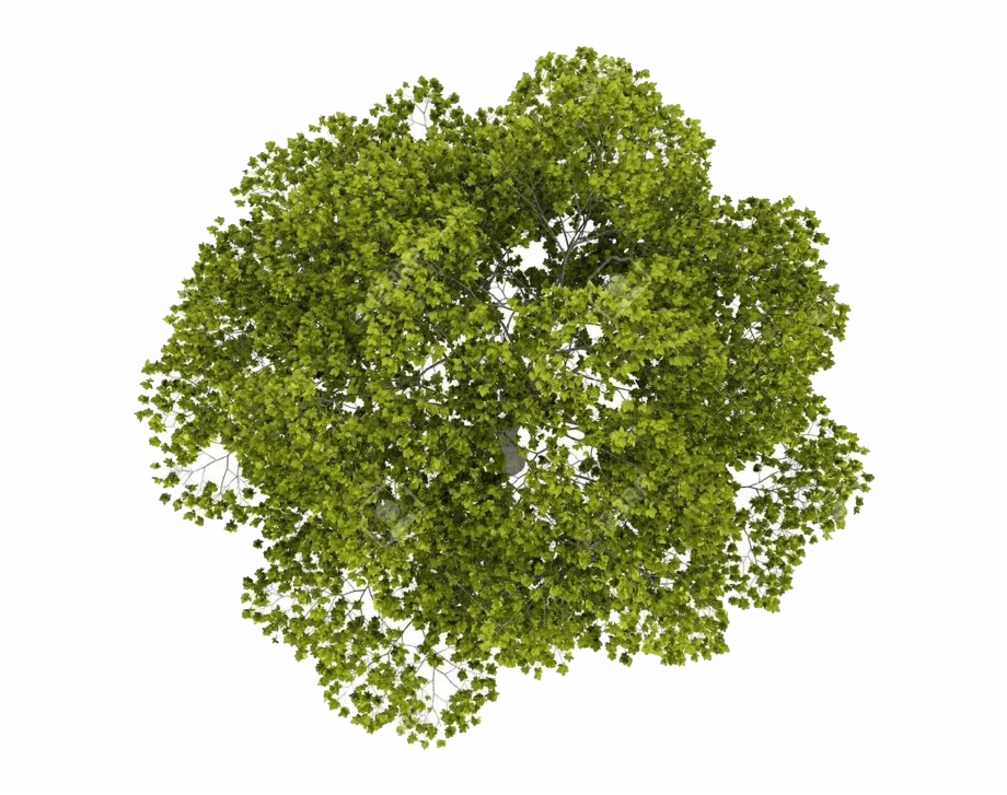 Top view tree clipart free download vector library download Download Tree Top Png Image - Tree Top View Photoshop Free PNG ... vector library download