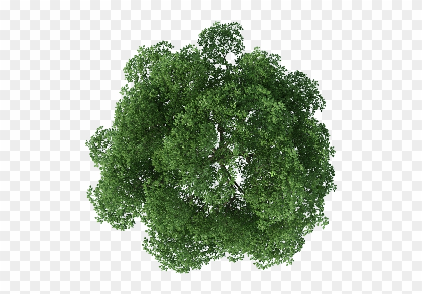 Top view tree clipart free download jpg royalty free library Rendering Top Tree View Download Free Image Clipart - Plan Png Trees ... jpg royalty free library