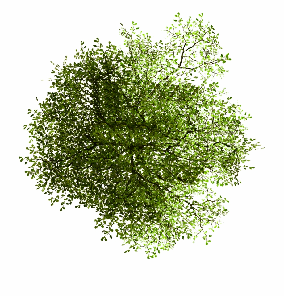 Clipart trees plan for photoshop banner transparent Tree In Plan Png Free PNG Images & Clipart Download #993771 - Sccpre.Cat banner transparent