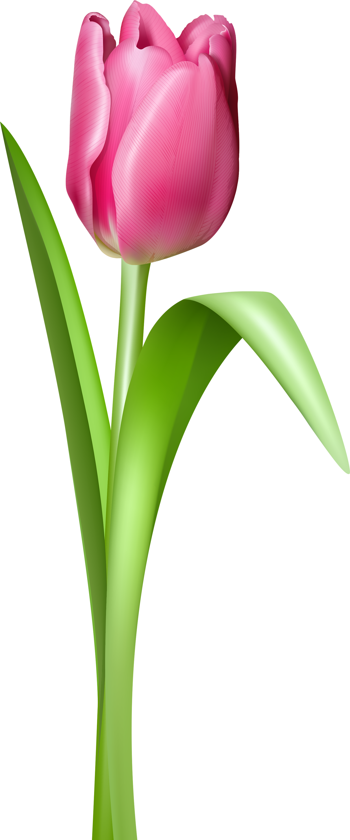 Tulip flower clipart black and white svg free stock Tulip PNG image | photos for painting | Pinterest | Flowers svg free stock