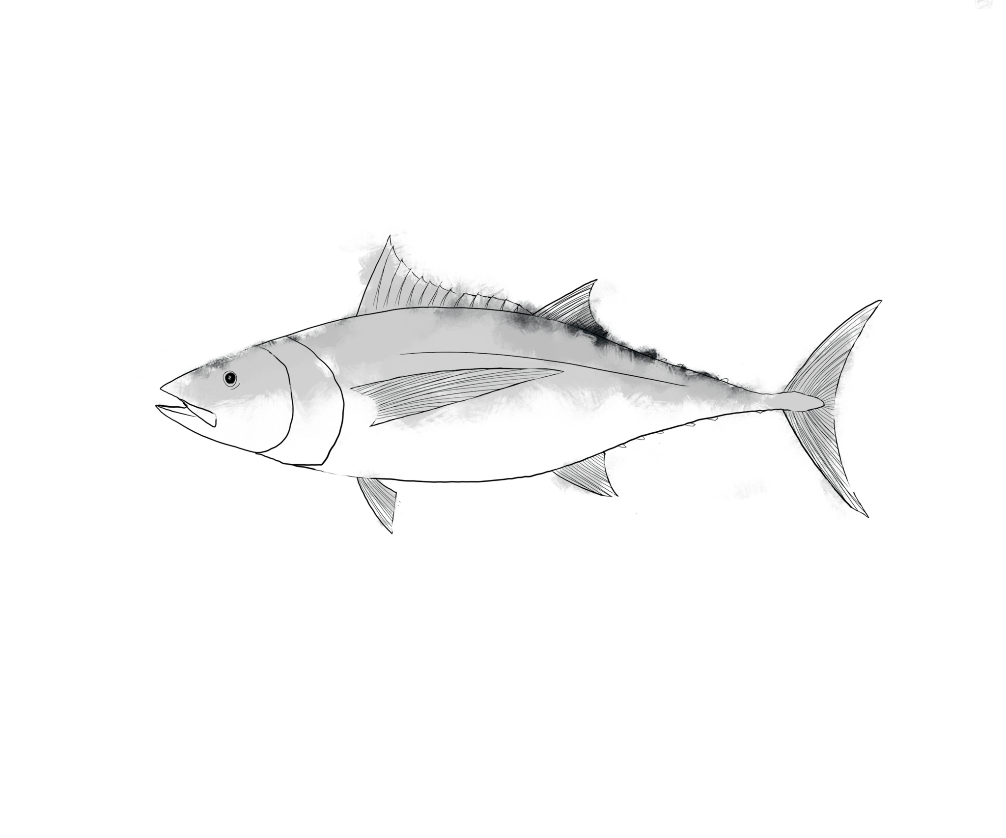 Clipart tuna fish black and white vector royalty free download Fishgirl Seafood vector royalty free download