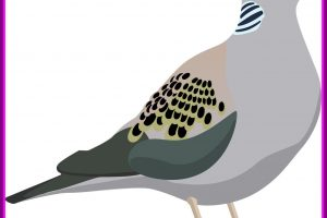 Clipart turtledove png library stock Free Dove Clipart turtle dove, Download Free Clip Art on Owips.com png library stock