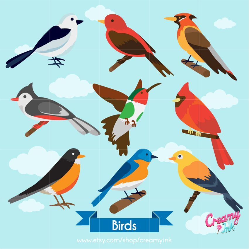 Clipart types clip transparent stock Birds digital clip art featuring different colours and types of ... clip transparent stock