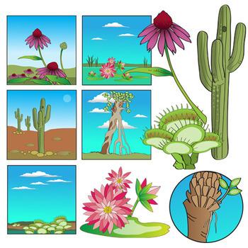 Clipart types clipart transparent download Plant Clip Art - Types and Habitats clipart transparent download