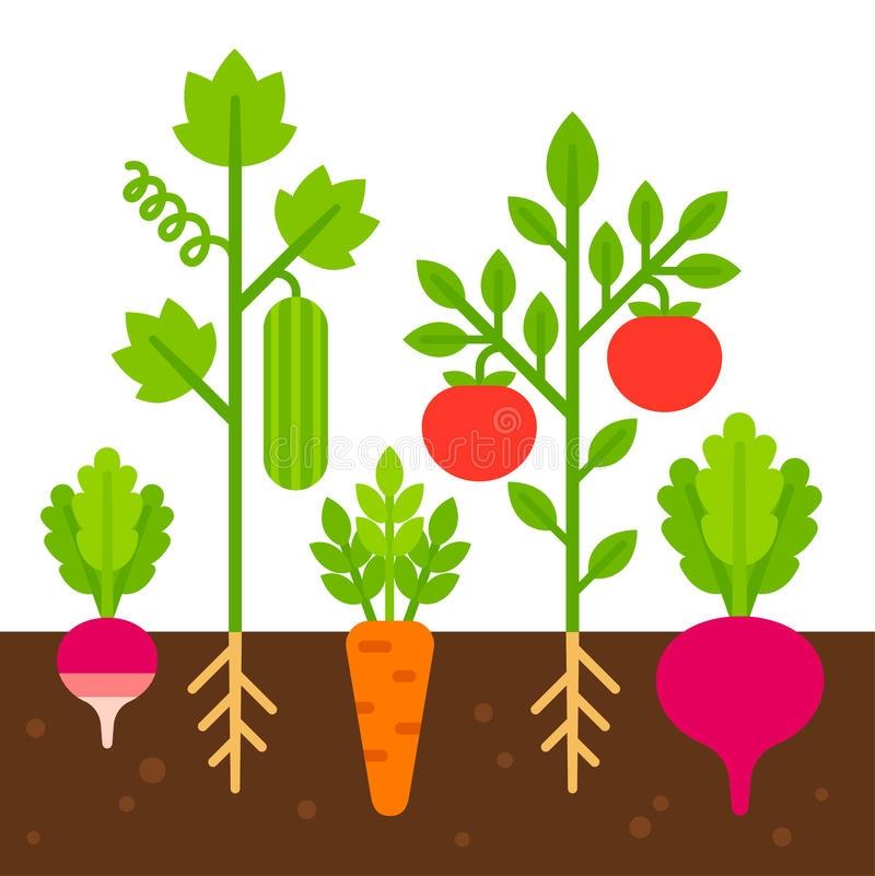 Clipart vegetable garden svg library stock Vegetable Garden Illustration Stock Vector Illustration Of intended ... svg library stock