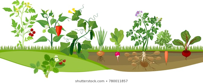 Clipart vegetable garden clipart transparent Healthy Backyard Vegetable Garden Stock Illustrations Images Unusual ... clipart transparent
