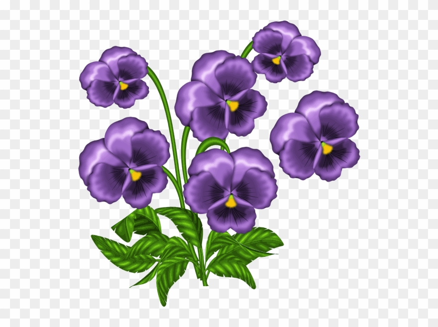 Clipart violets picture library stock African Violets Clipart - Png Download (#1527601) - PinClipart picture library stock