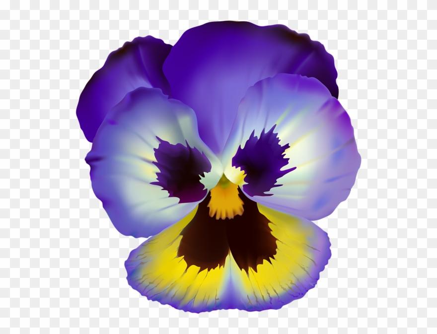 Violets clipart images clipart freeuse download Violet Flower Transparent Clip Art - Pansy Flower Clear Background ... clipart freeuse download
