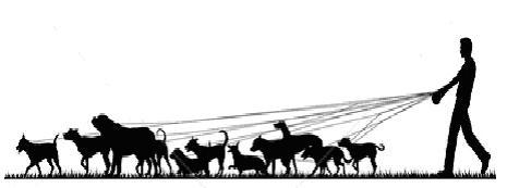 Funny clip art free. Clipart walk the dog