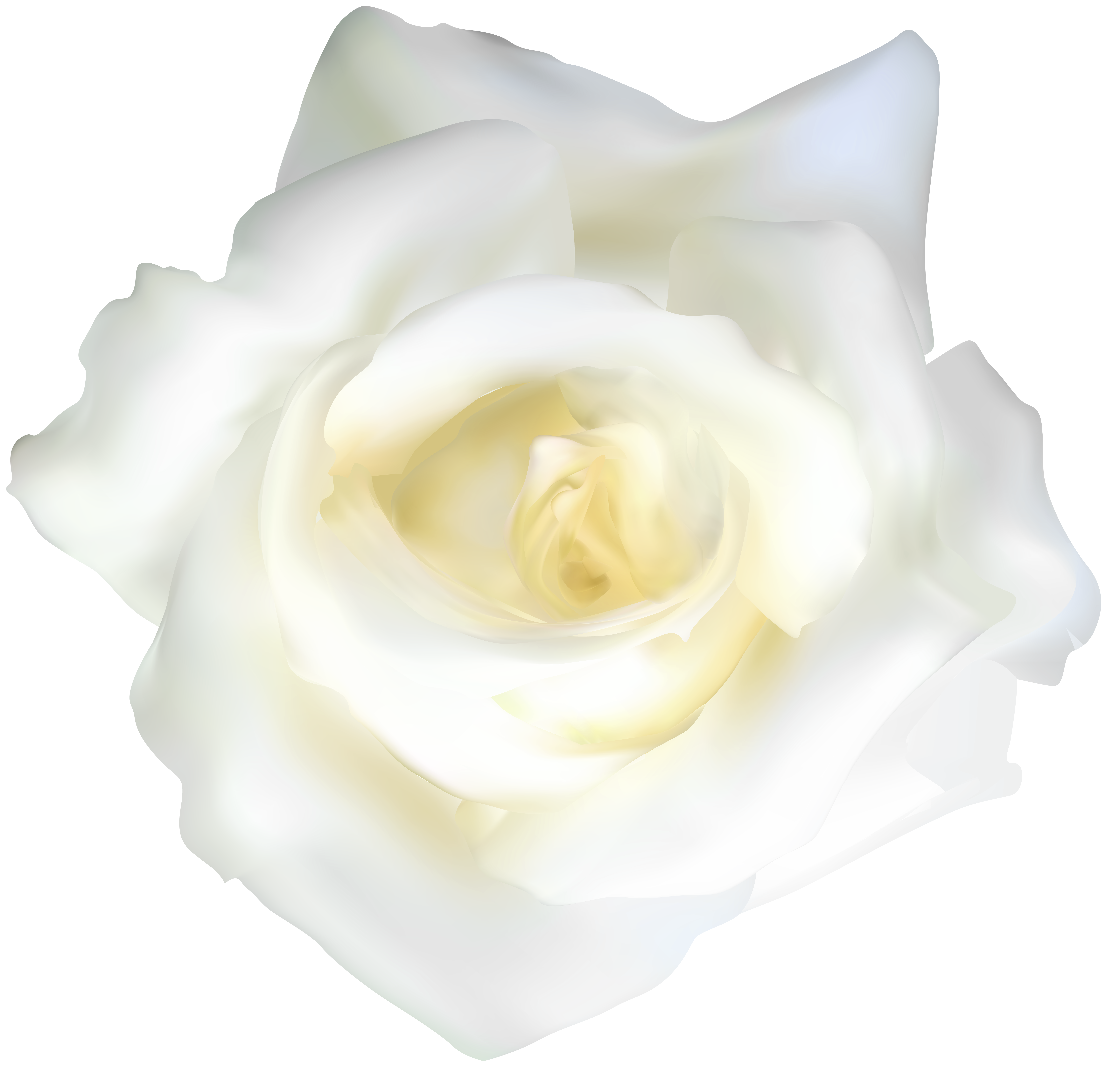 Clipart white rose clipart White Rose Transparent Clip Art | Gallery Yopriceville - High ... clipart