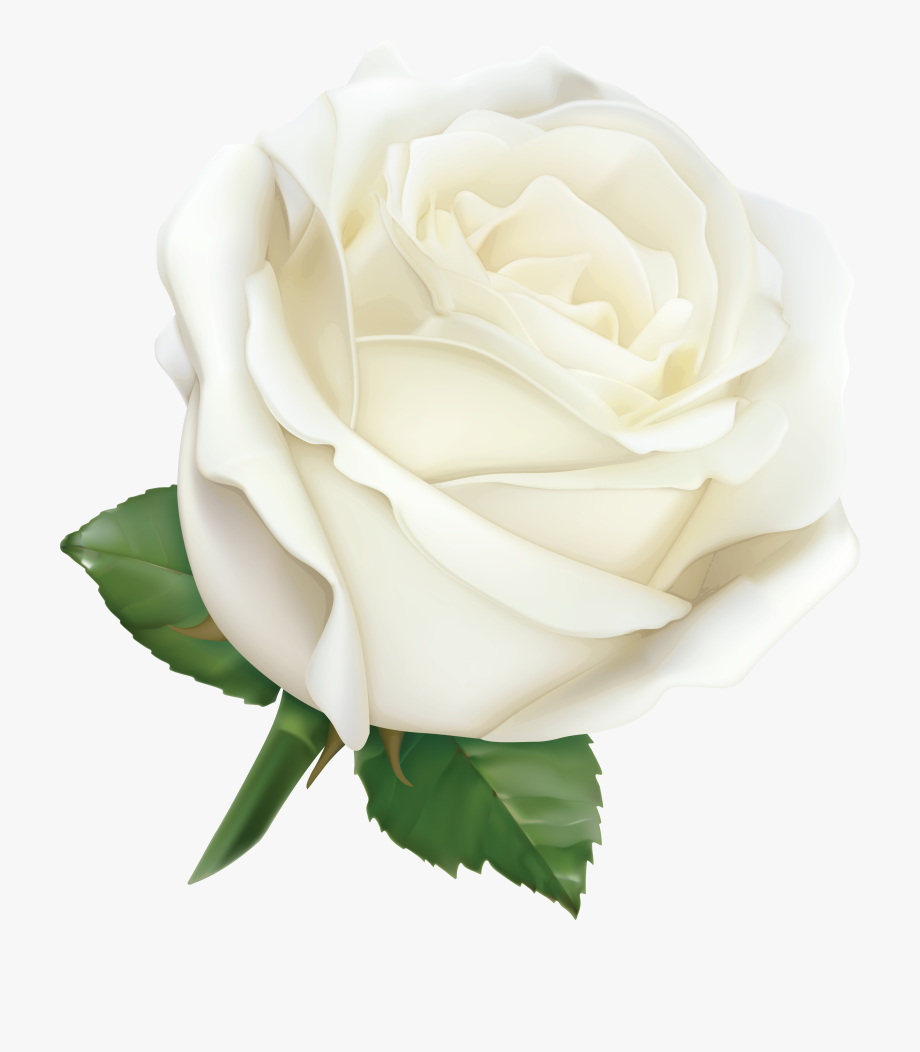 Clipart white rose image transparent download White Rose Clipart Download - تحميل صور ورد ابيض #226897 - Free ... image transparent download