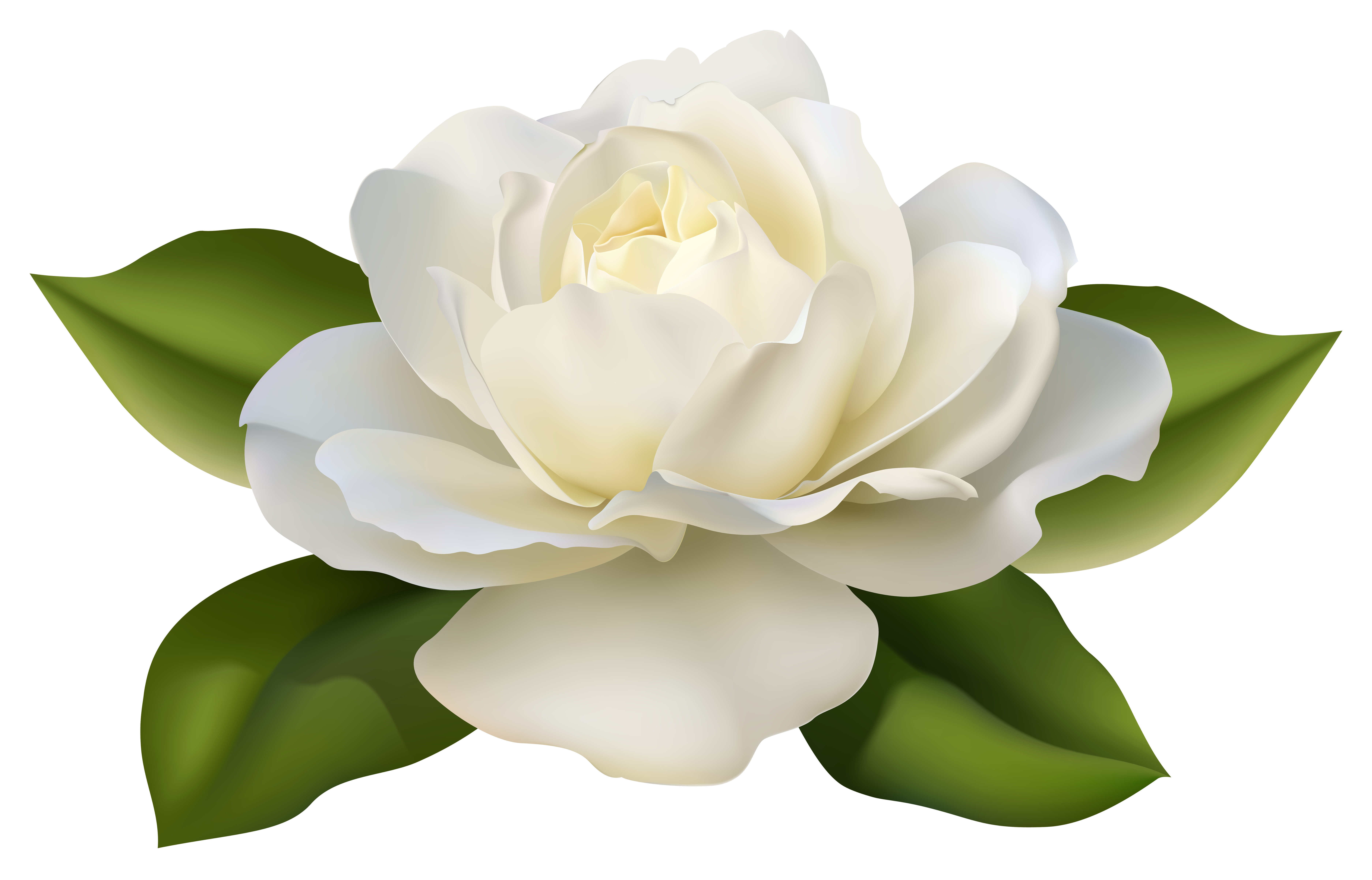 Clipart white rose clipart free library Beautiful White Rose with Leaves PNG Image | Gallery Yopriceville ... clipart free library