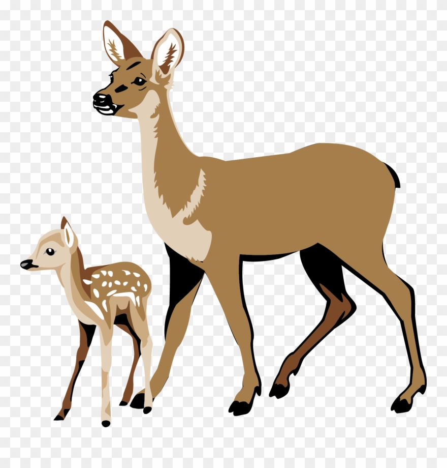 Whitetail deer in woods clipart stock Whitetail Deer Clipart - Deer And Fawn Clipart - Png Download ... stock