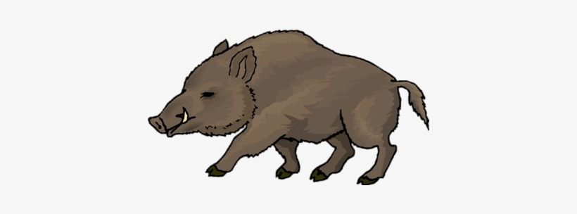 Clipart wild boar png royalty free download Wild Boar Drawing | Free download best Wild Boar Drawing on ... png royalty free download