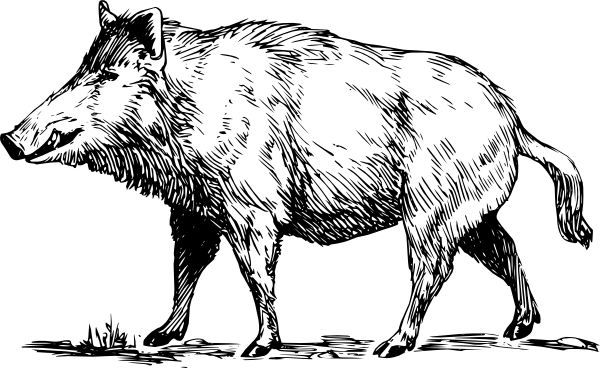 Clipart wild boar freeuse library Boar Clip Art at Clker.com - vector clip art online, royalty free ... freeuse library