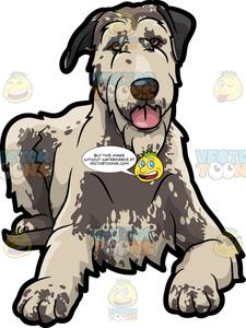 Clipart wolfhound png library library A Nice Irish Wolfhound Pet Dog png library library