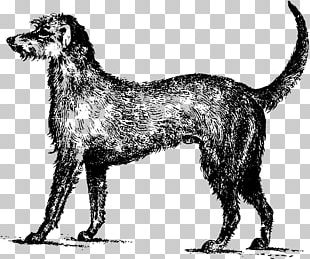 Clipart wolfhound svg black and white library Wolfhound PNG Images, Wolfhound Clipart Free Download svg black and white library
