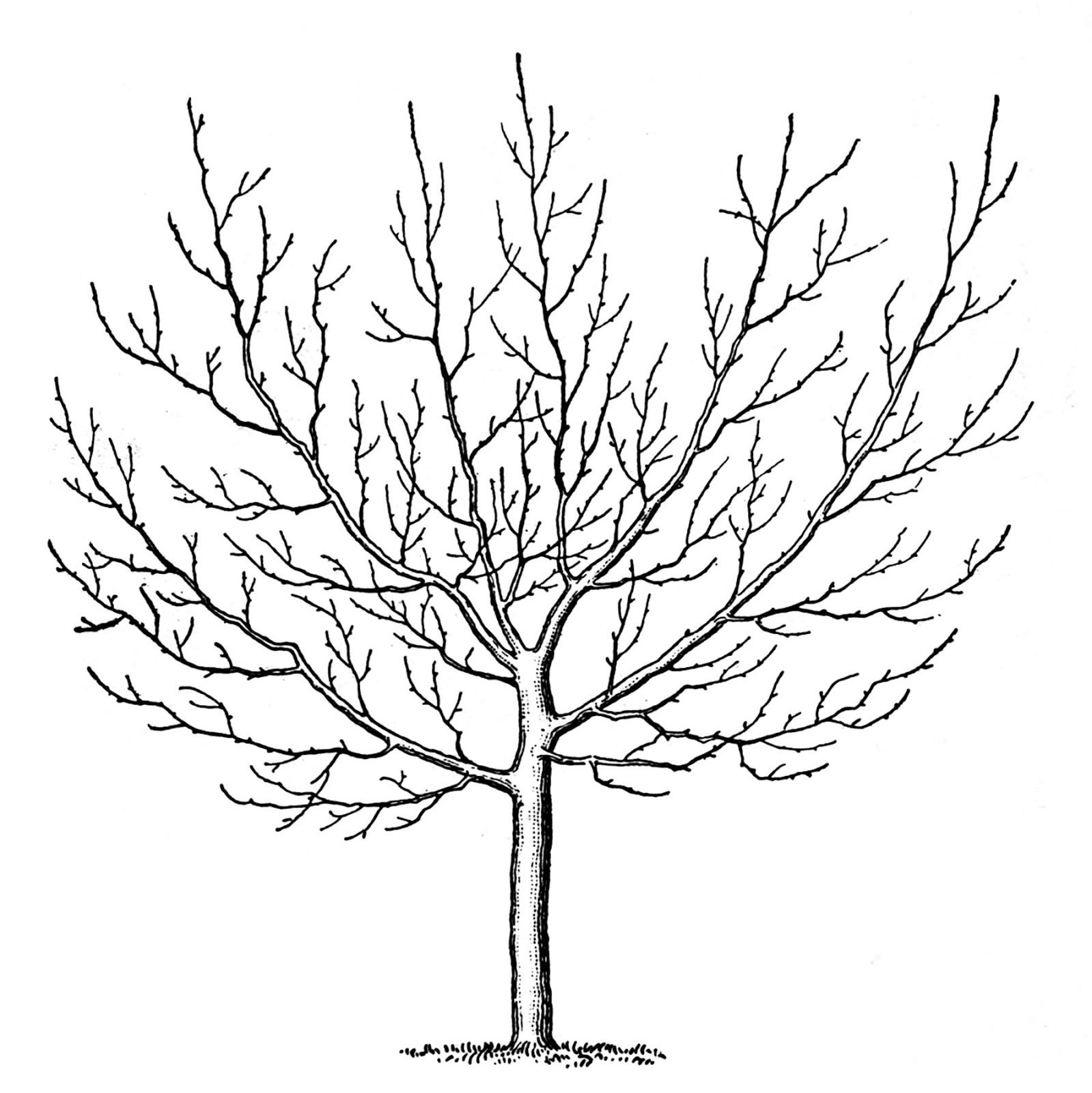Clipart woman dancing around tree jpg free stock Clipart woman dancing around tree - Clip Art Library jpg free stock