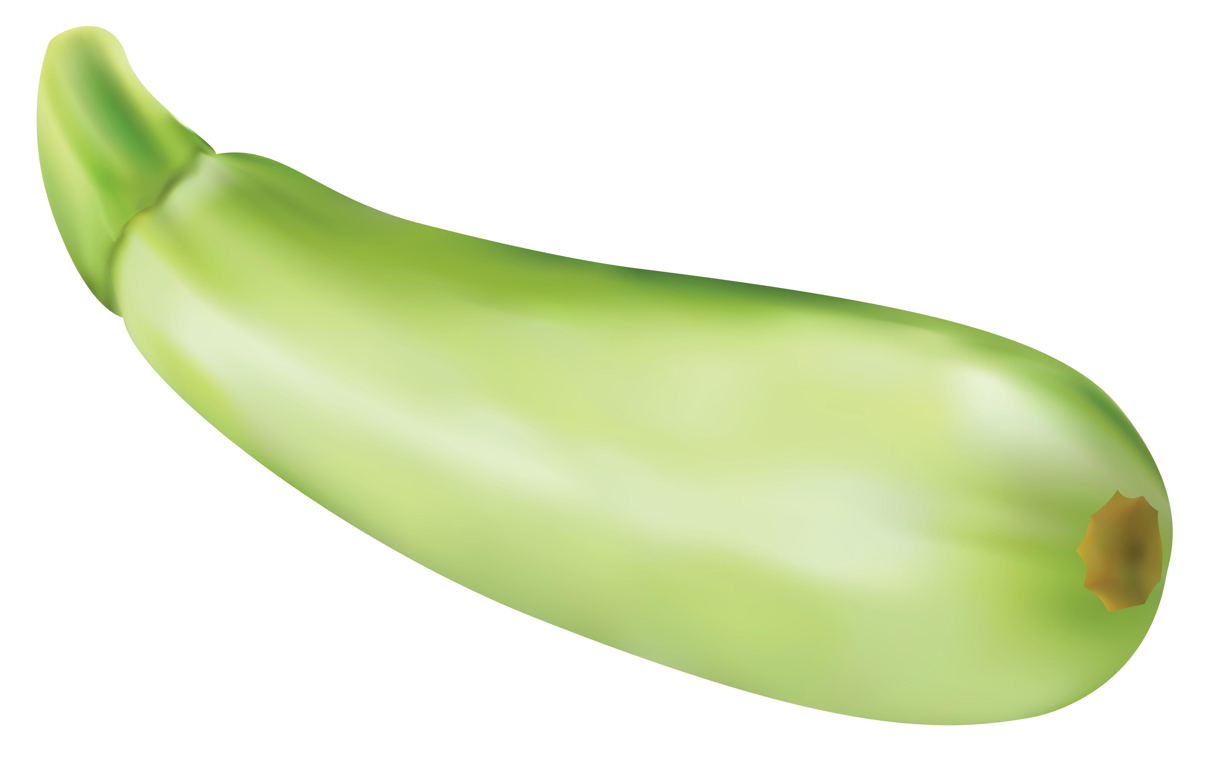 Clipart zucchini free stock Zucchini clipart free - ClipartFest free stock