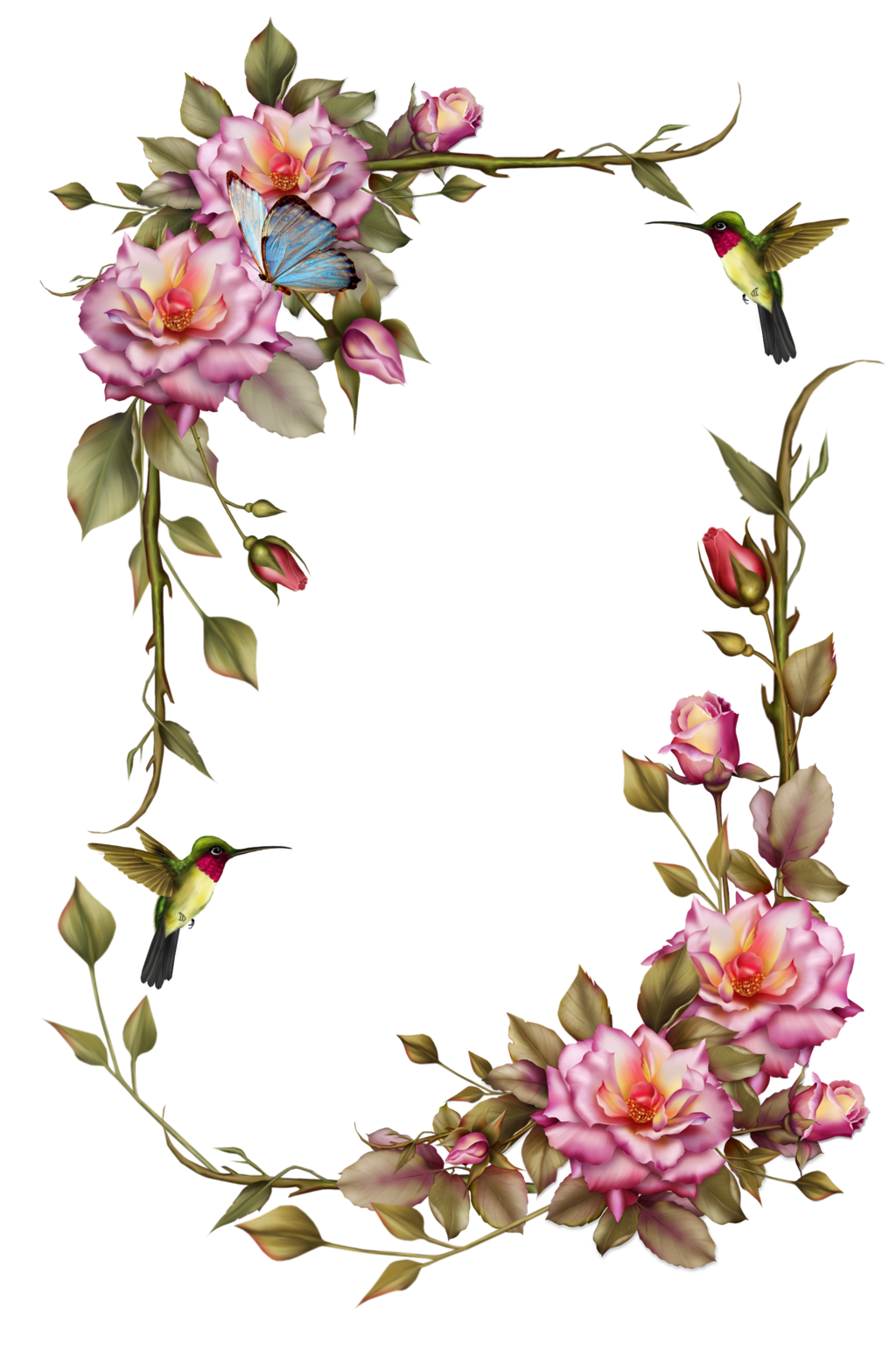 Clipart-flower borders and frames clip art royalty free download Hummingbird Borders Clipart clip art royalty free download