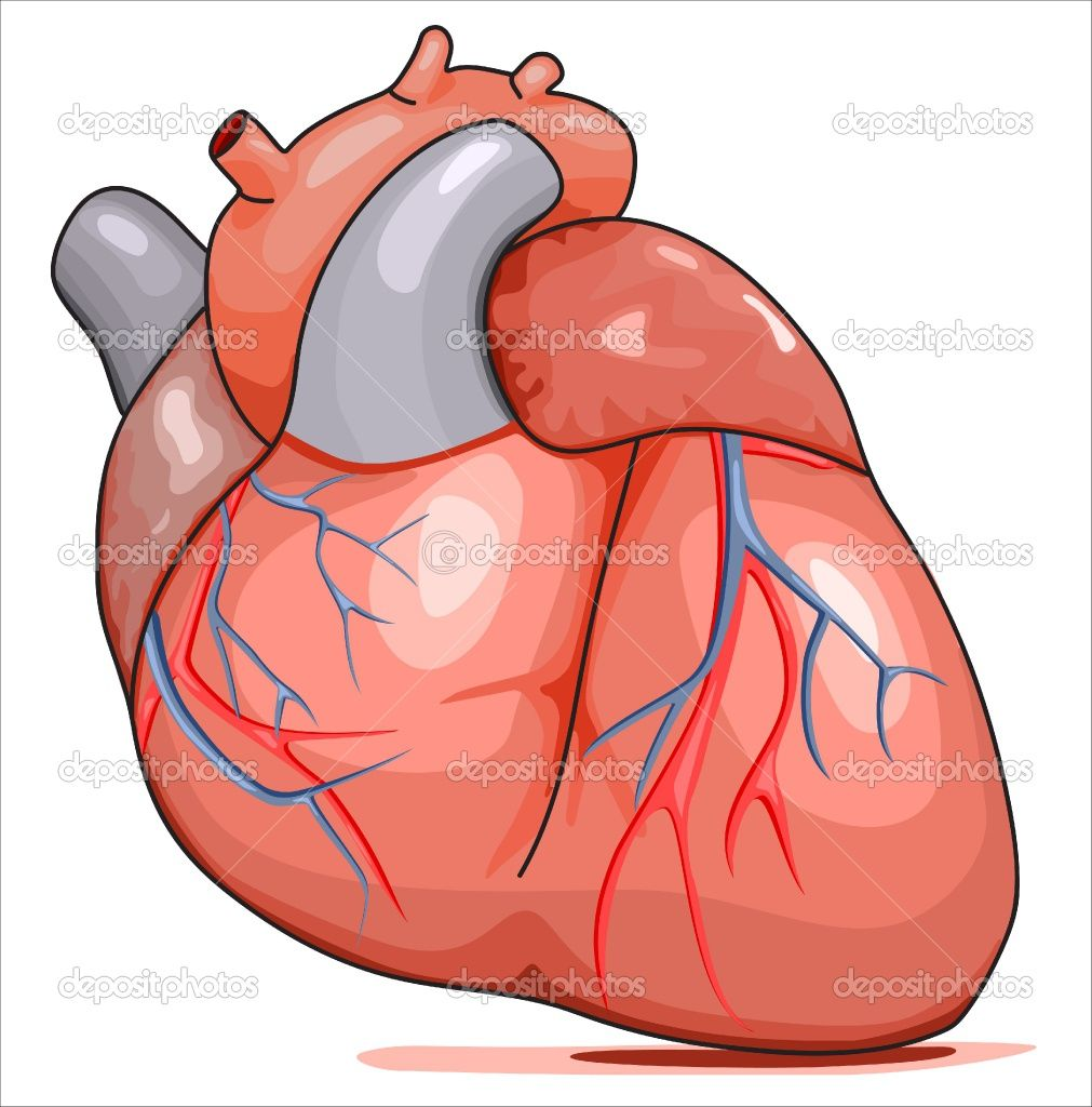 Cartoon human body clipart clipart freeuse Cartoon Human Heart Clip Art | Cartoon Human Heart - ClipArt Best ... clipart freeuse