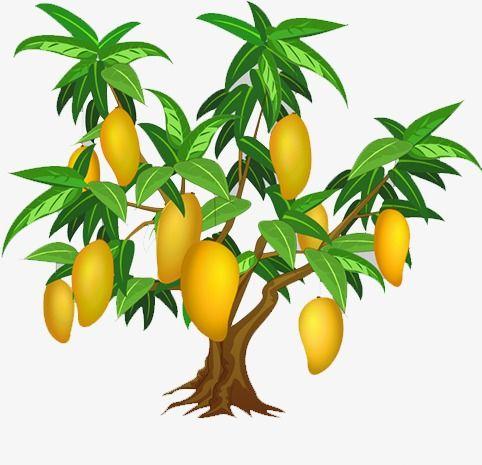 Cliparts of mango tree image royalty free Mango Tree, Mango Clipart, Tree Clipart PNG Transparent Clipart ... image royalty free