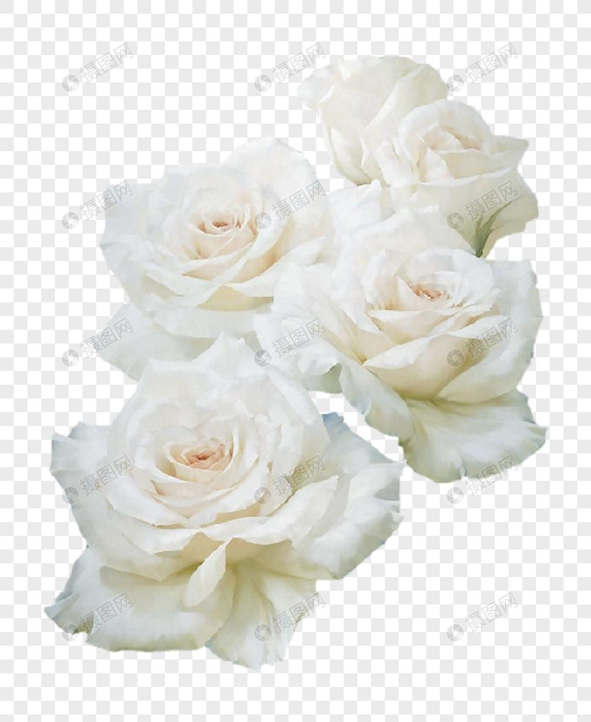 Cliparts rose blanche svg free download Photo de rose blanche_Numéro de l\'image400778993_Format d\'image ... svg free download